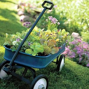 BHG gardening photo 1 salad-garden container